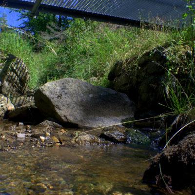 potok w Sokolcu